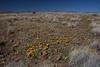 NM-2012-011: Steins, Hidalgo County, NM, USA