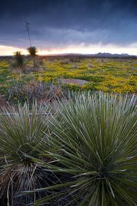 NM-2010-115: Baylor Canyon, Dona Ana County, NM, USA