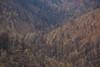 NM-2013-335: Black Range, Sierra County, NM, USA