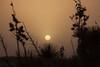 NM-2013-253: Santa Teresa, Dona Ana County, NM, USA