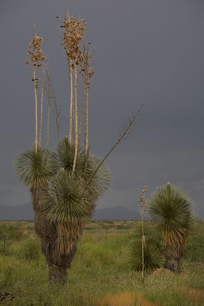 NM-2006-004: , Hidalgo County, NM, USA