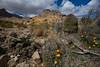 NM-2010-098: Florida Mountains, Luna County, NM, USA