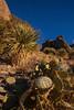 NM-2013-111: Soledad Canyon, Dona Ana County, NM, USA