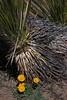 NM-2012-014: Steins, Hidalgo County, NM, USA