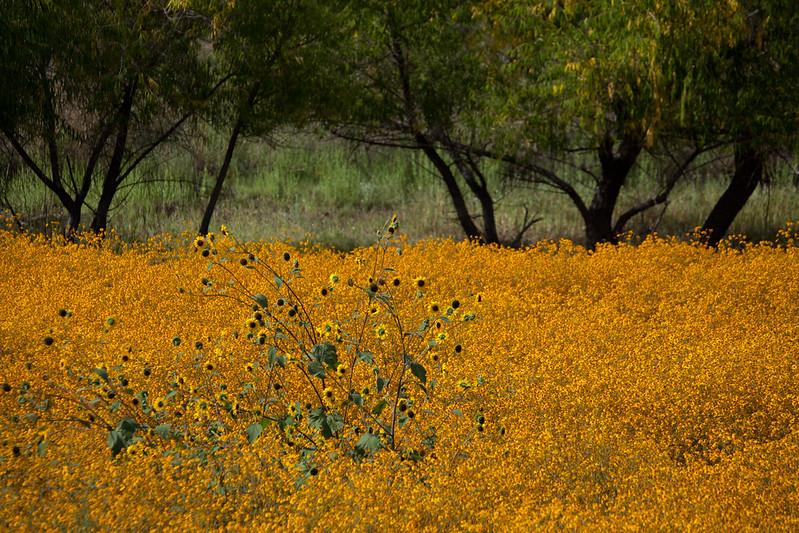 NM-2011-296: Cloverdale, Hidalgo County, NM, USA