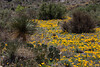 NM-2012-095: , Dona Ana County, NM, USA