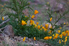 NM-2012-022: Steins, Hidalgo County, NM, USA
