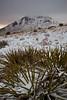 NM-2011-415: Soledad Canyon, Dona Ana County, NM, USA