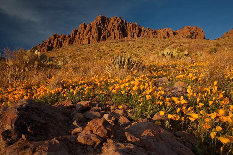NM-2012-075: Rockhound State Park, Luna County, NM, USA