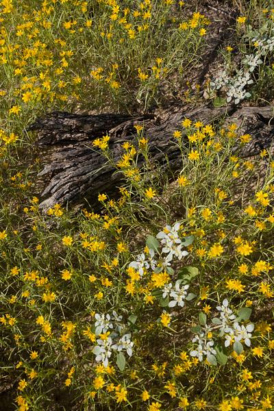 NM-2008-024: Santa Teresa, Dona Ana County, NM, USA