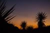 NM-2013-521: , Dona Ana County, NM, USA