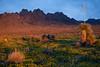 NM-2010-120: Organ Mountains, Dona Ana County, NM, USA