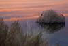 NM-2012-310: Mesilla, Dona Ana County, NM, USA