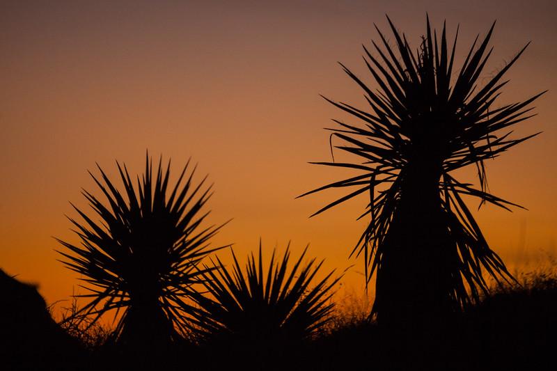 NM-2013-522: , Dona Ana County, NM, USA