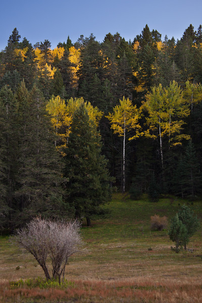 NM-2011-300: Lincoln National Forest, Otero County, NM, USA