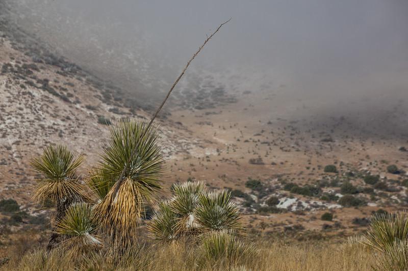 NM-2013-547: , Dona Ana County, NM, USA