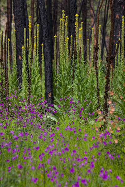 NM-2013-446: Gila Wilderness, Catron County, NM, USA