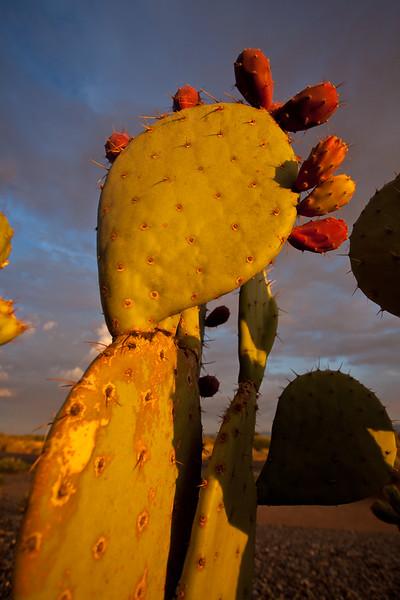 NM-2011-161: , Dona Ana County, NM, USA