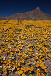 NM-2012-105: , Dona Ana County, NM, USA
