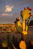 NM-2011-160: , Dona Ana County, NM, USA