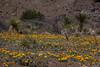NM-2012-094: , Dona Ana County, NM, USA