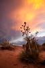 NM-2011-144: Santa Teresa, Dona Ana County, NM, USA