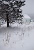 NM-2011-032: Cloudcroft, Otero County, NM, USA