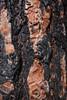 NM-2013-445: Gila Wilderness, Catron County, NM, USA