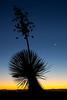NM-2010-114: Baylor Canyon, Dona Ana County, NM, USA