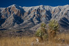 NM-2013-545: , Dona Ana County, NM, USA