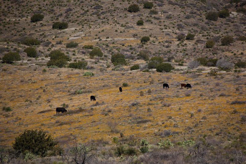 NM-2010-135: Florida Mountains, Luna County, NM, USA