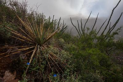 NM-2013-421: Organ Mountains, Dona Ana County, NM, USA
