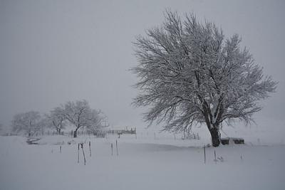 NM-2010-060: Cox Canyon, Otero County, NM, USA
