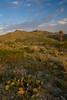 NM-2008-023: Vado, Dona Ana County, NM, USA