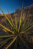 NM-2013-516: , Dona Ana County, NM, USA