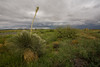NM-2006-001: , Hidalgo County, NM, USA