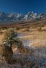 NM-2013-538: , Dona Ana County, NM, USA