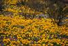 NM-2012-088: Florida Mountains, Luna County, NM, USA