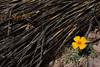 NM-2012-009: Steins, Hidalgo County, NM, USA