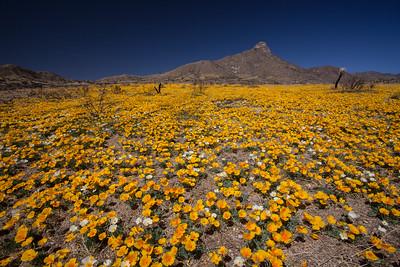 NM-2012-106: , Dona Ana County, NM, USA