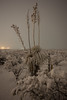 NM-2013-116: Lordsburg, Hidalgo County, NM, USA