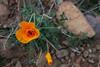 NM-2012-023: Steins, Hidalgo County, NM, USA