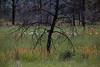 NM-2013-447: Gila Wilderness, Catron County, NM, USA