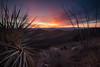NM-2013-122: Achenbach Canyon, Dona Ana County, NM, USA
