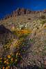 NM-2012-071: Rockhound State Park, Luna County, NM, USA
