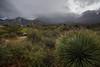 NM-2013-434: Aguirre Springs, Dona Ana County, NM, USA
