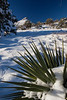 NM-2013-038: Bootheel, Coronado National Forest, NM, USA