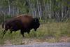 NT-2010-039: , South Slave Region, NT, Canada