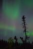 NT-2013-124: Prelude Lake, Ingraham Trail, NT, Canada