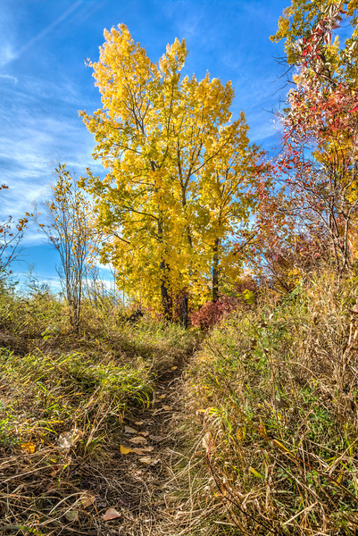 Fall Colors on the Path